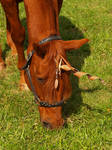 Copper Unicorn Headshot Stock by Things0fMagic