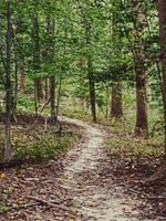 Winding Trail Stock IV