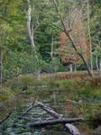 Autumn Marsh Stock