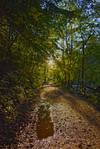 Sunlit Trail Stock: HDR