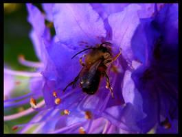 Spring Worker 03