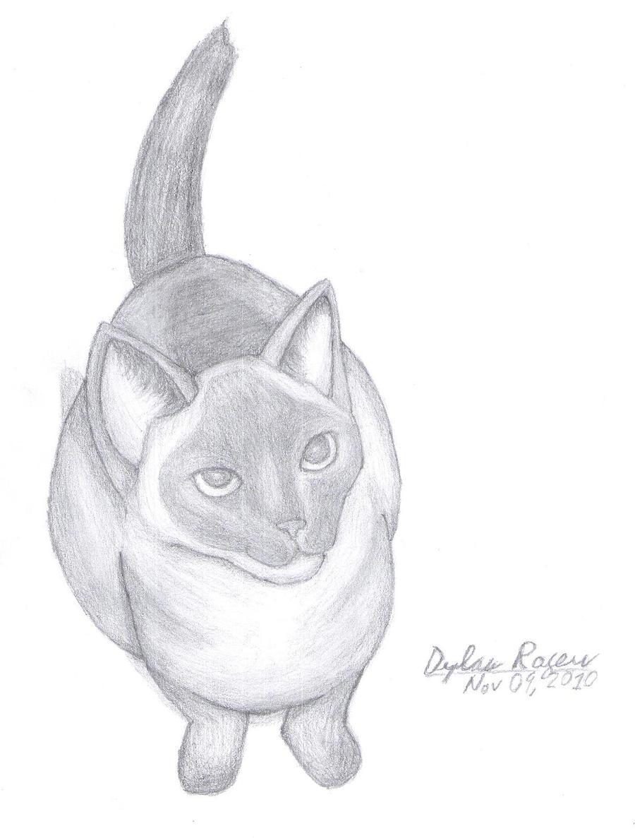 Rocky the Cat by FluffyKnight