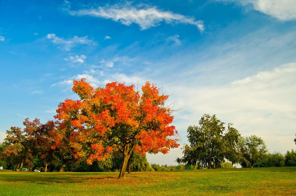 Fall Tree by jpnunezdesigns