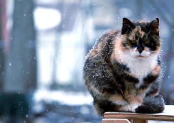 Winter Cat by Immortal-Innocence-x