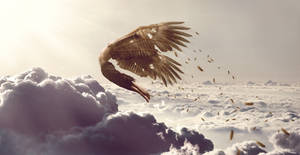 Glory of Icarus
