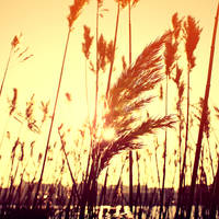 among the reed by Gehoersturz
