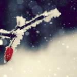 winter pt. I by Gehoersturz