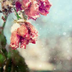 winter pt. II by Gehoersturz