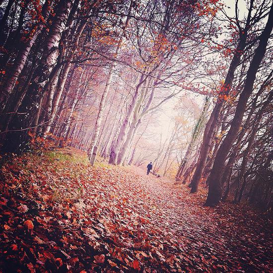 a walk in the woods by Gehoersturz