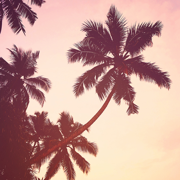 palm trees by Gehoersturz