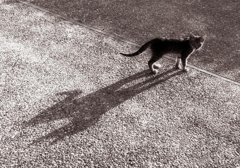 shadow by ladybluejinx