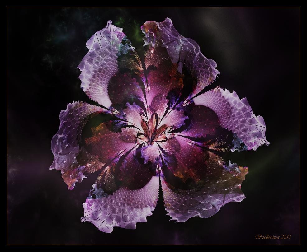 Solanaceae by Szellorozsa