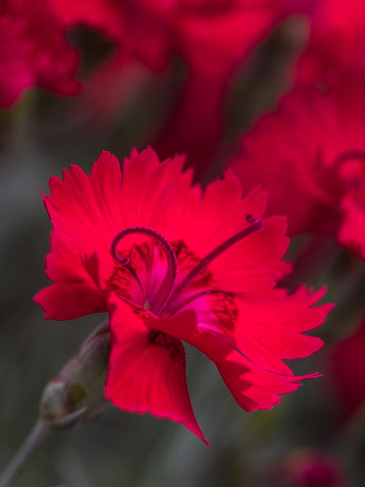 Red Memories by Szellorozsa