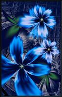 <b>Mystic Blue</b><br><i>Szellorozsa</i>