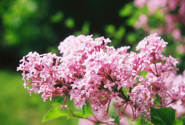 Tiny pink flowers by marshmallowinvader on deviantart tiny pink flowers by marshmallowinvader mightylinksfo