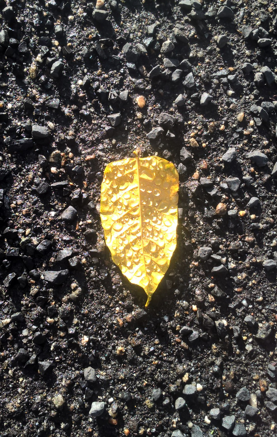 golden leaf with drops of water by Isunah