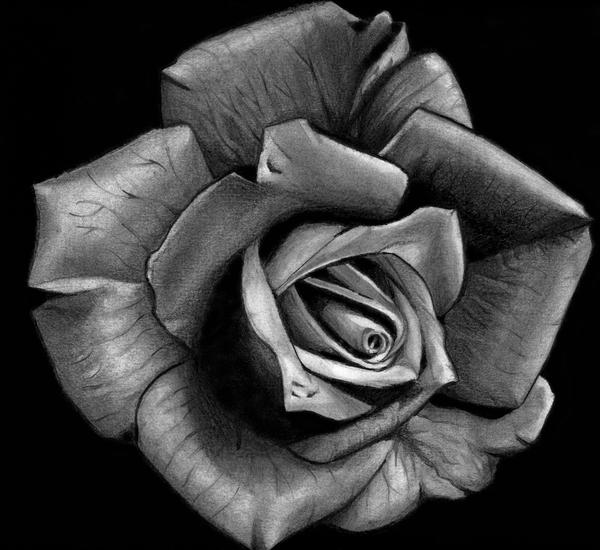 Black Rose Painting Black Rose Immortal by
