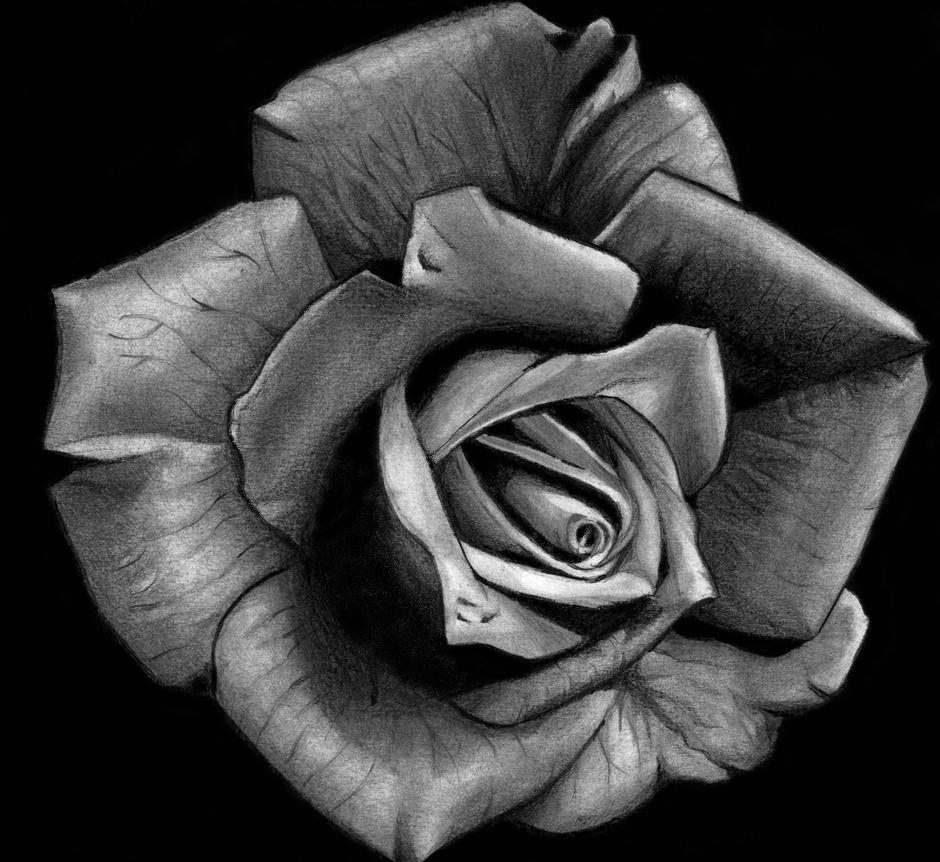 White Rose Tattoo Men