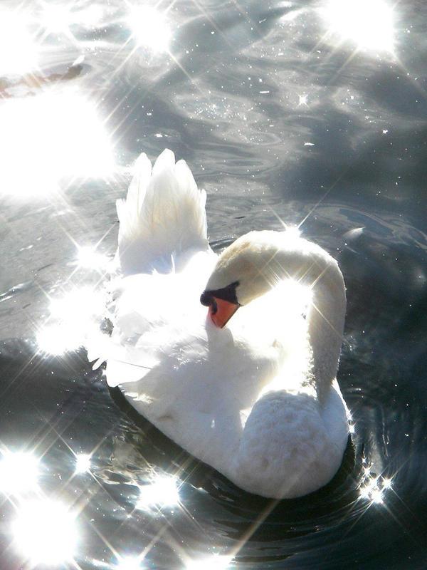 Stock 131: starry swan 3 by AlzirrSwanheartStock