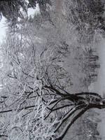Stock 353: winter trees 3 by AlzirrSwanheartStock