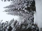 Stock 354: winter trees 4