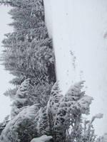 Stock 356: winter trees 6 by AlzirrSwanheartStock