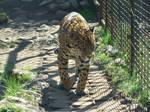 Stock 370: jaguar