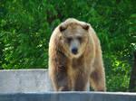 Stock 392: bear 1
