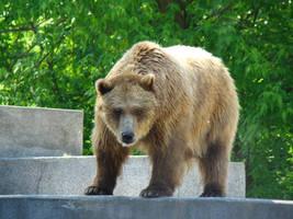 Stock 393: bear 2 by AlzirrSwanheartStock