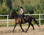 Stock 428: horse+rider trot