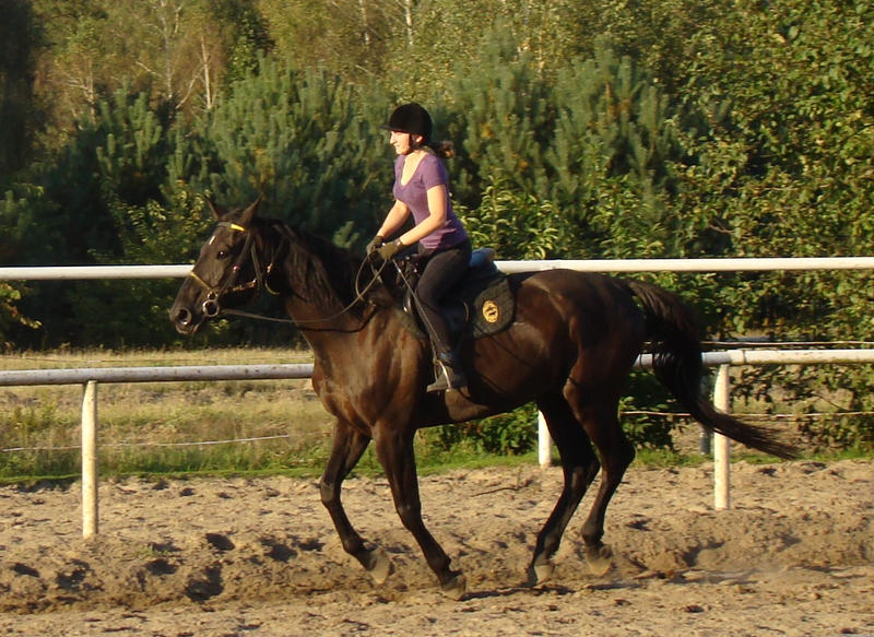 how to make a horse gallop