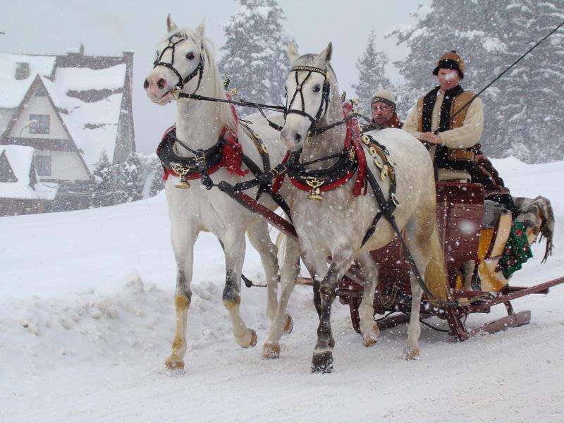 Stock 507: winter  sleigh