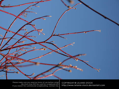 Branches 001