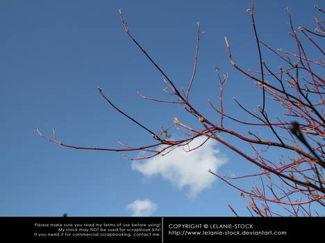 Branches 002