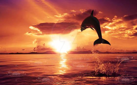 Dolphin-Sunset
