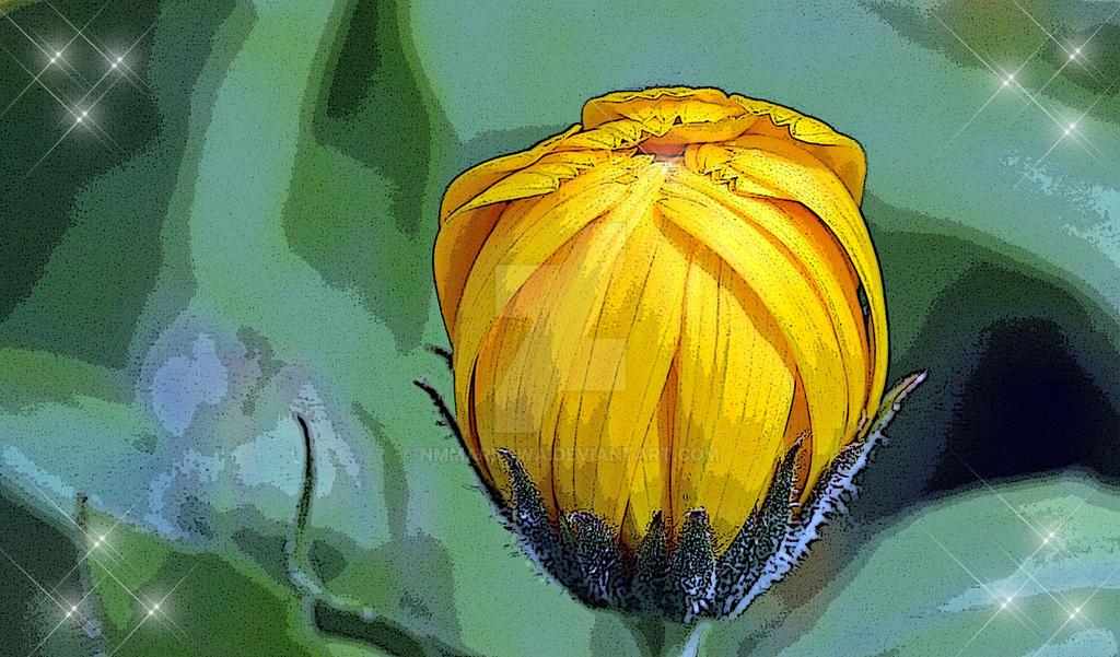 Marigold by nmmarkowa