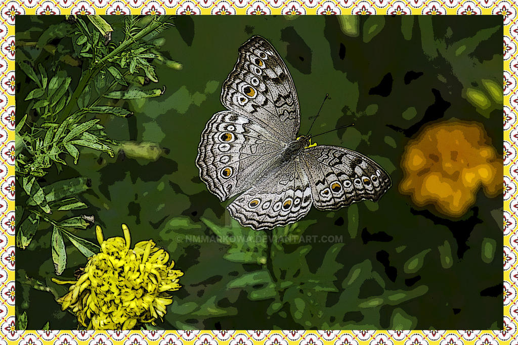 Butterfly by nmmarkowa