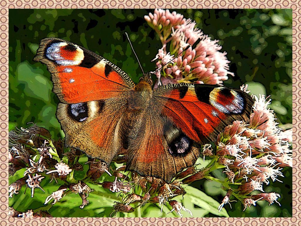 Butterfly6 by nmmarkowa