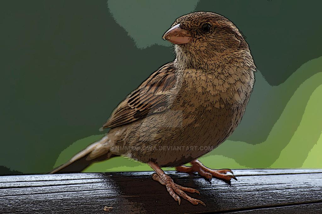 Sparrow by nmmarkowa