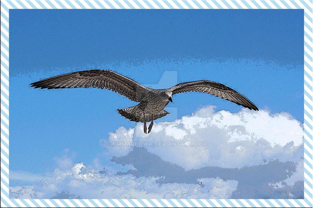 Seagull by nmmarkowa