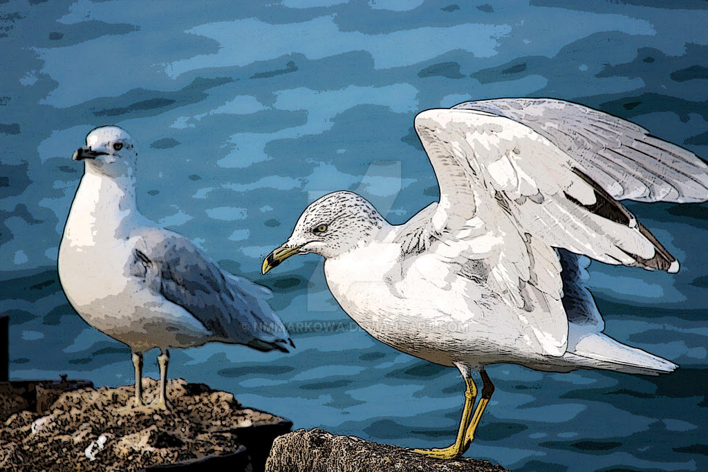 Seagulls by nmmarkowa
