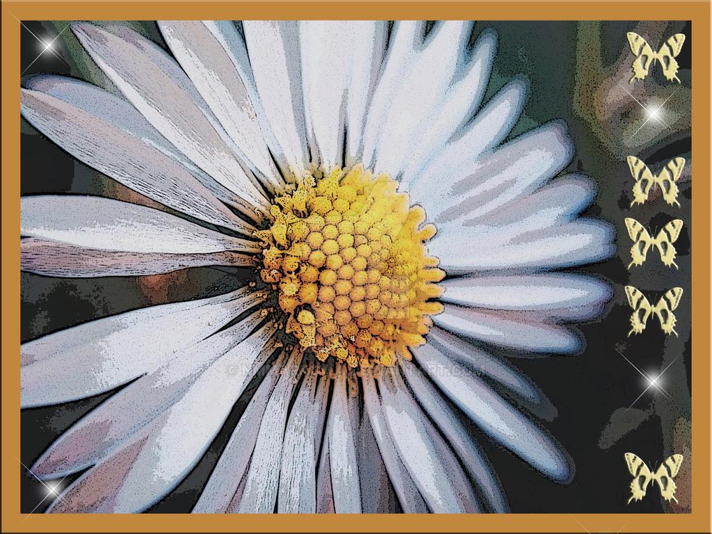 Daisy by nmmarkowa
