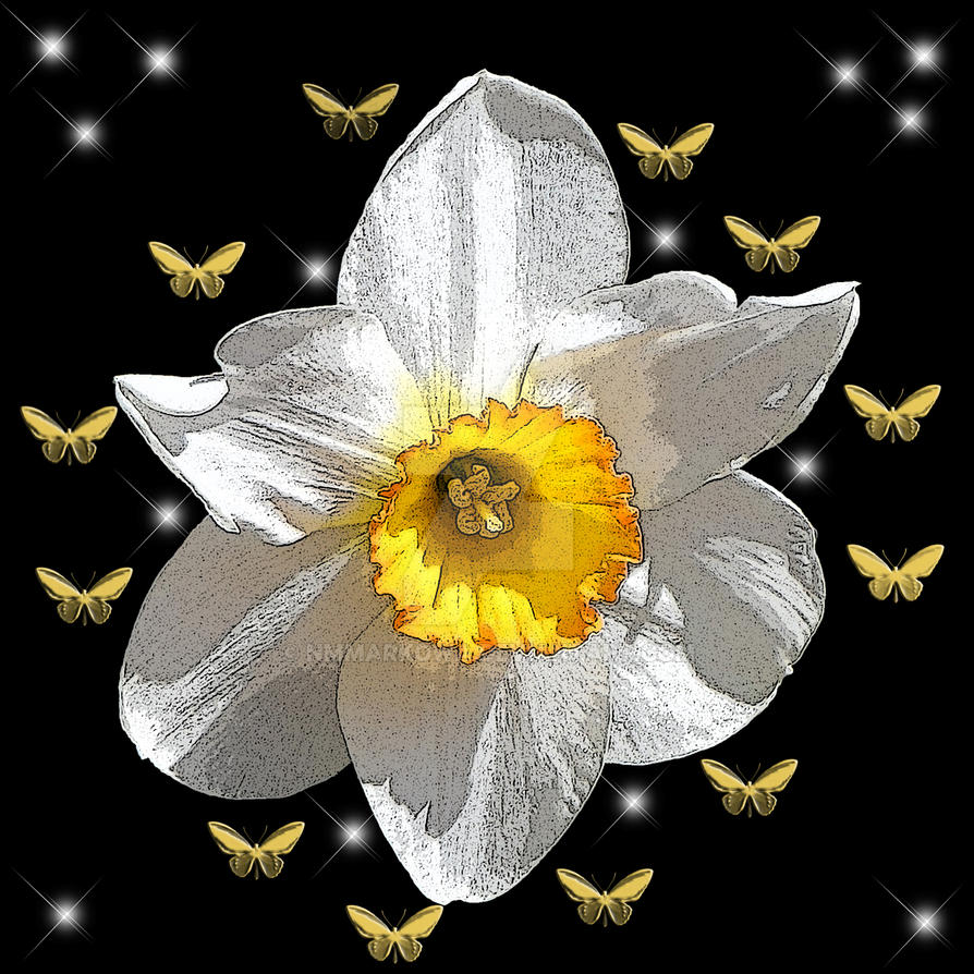 Daffodil by nmmarkowa