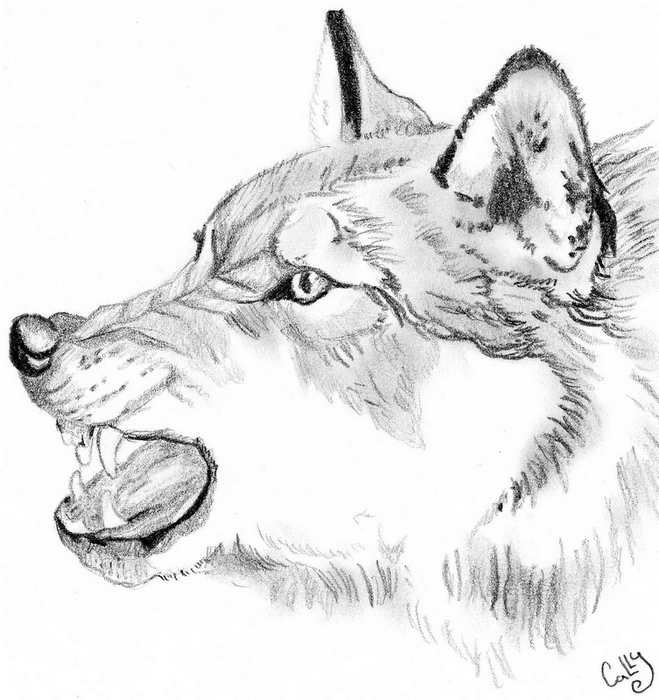 Angry wolf by Cally-Dream on DeviantArt