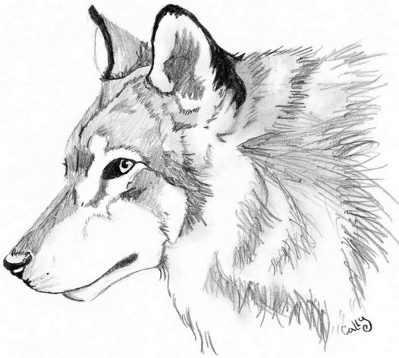 Wolf Head by Cally-Dream on DeviantArt