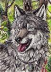 ACEO-LabradoriteWolf