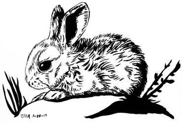 Baby Bunny by typomazoku