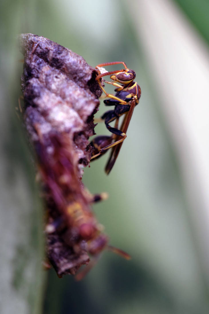 Paper Wasp and Nest by typomazoku
