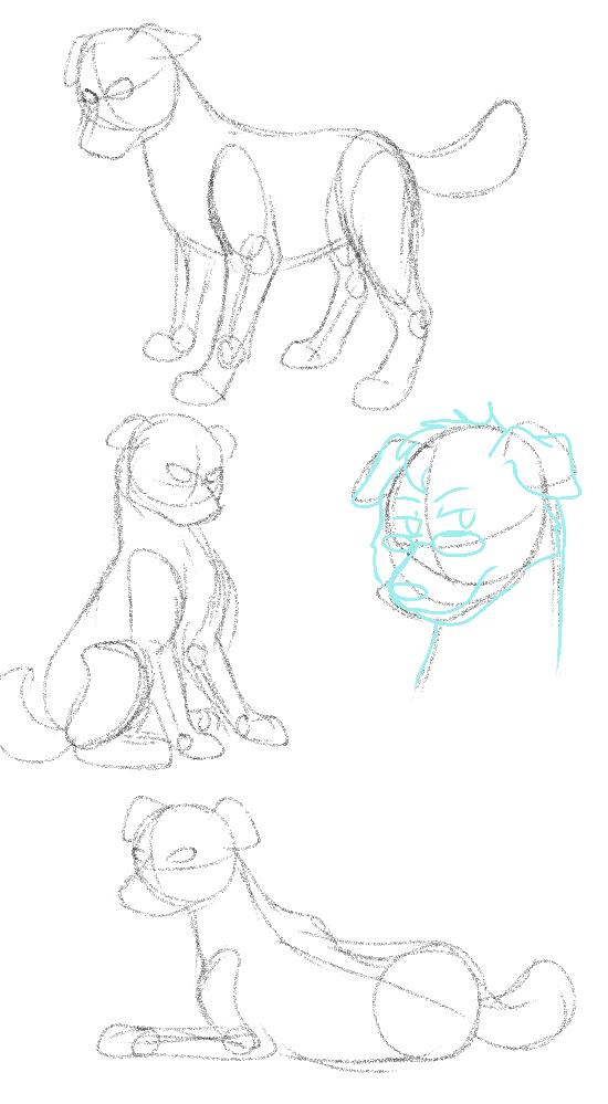 dog anatomy sketches by BLACKBLOOD-QUEEN on DeviantArt