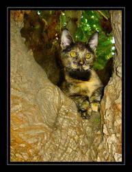 Kitty Adventures 1 by roxykjones